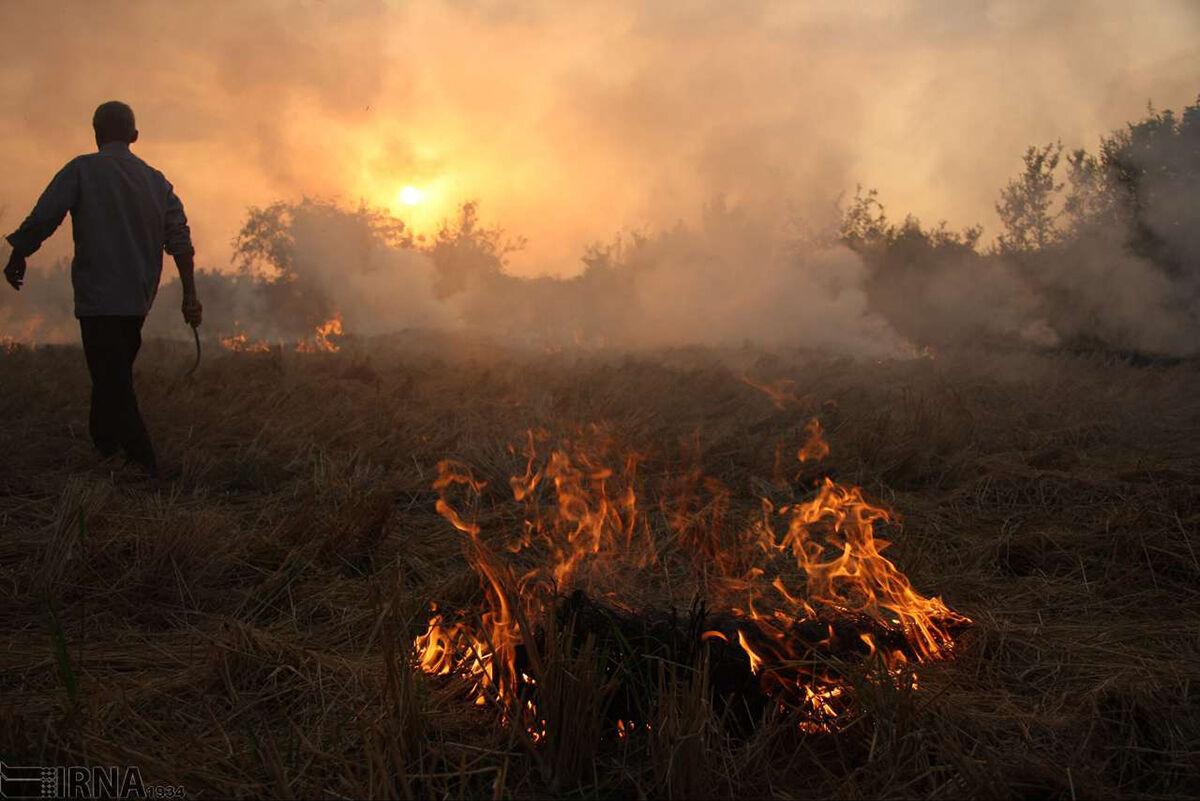 آتش زدن کاه و کلش مزارع؛فاجعه زیستمحیطی