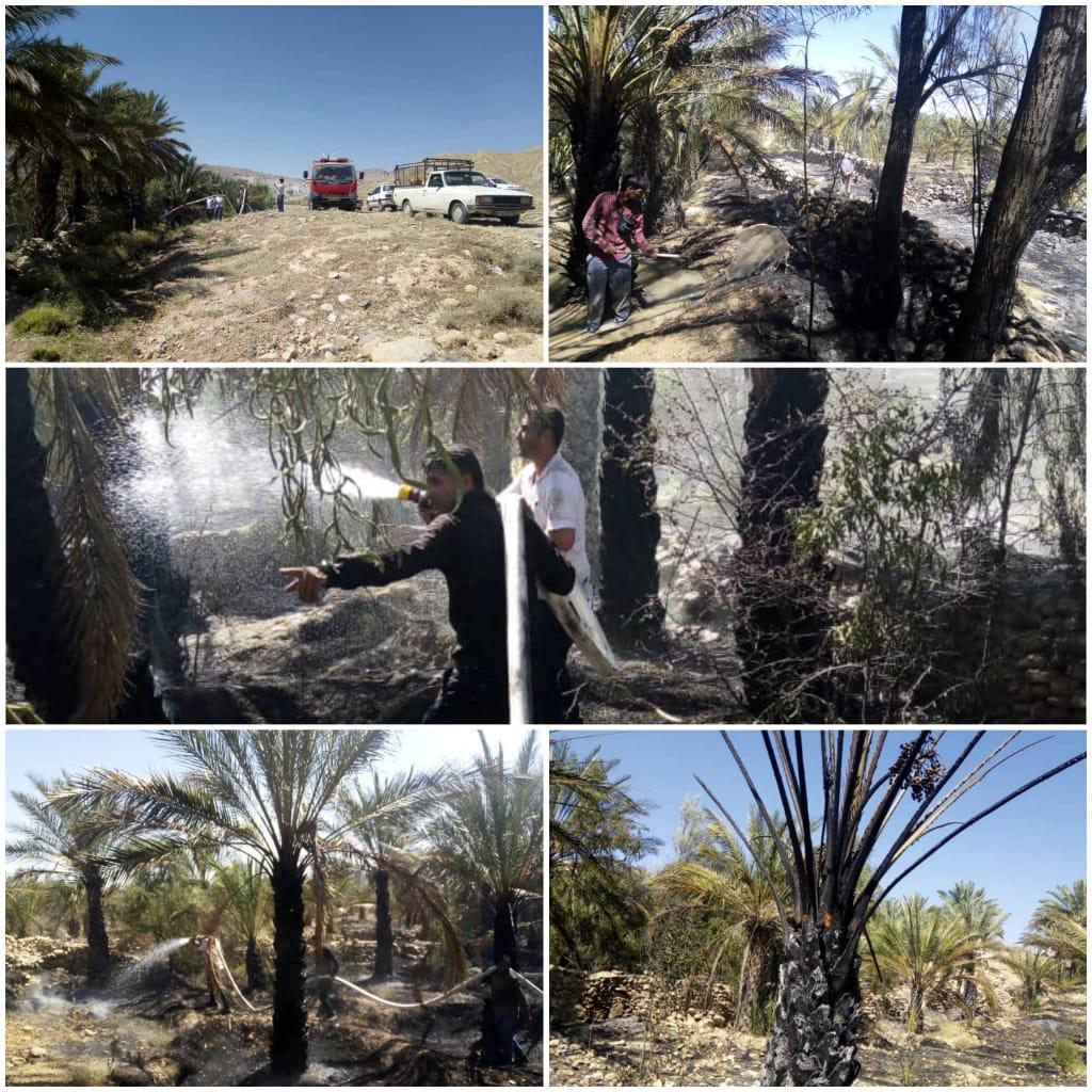 ۱۰۰۰ نفر نخل سوخته در آتش سوزی روز گذشته منطقه کنارسیاه